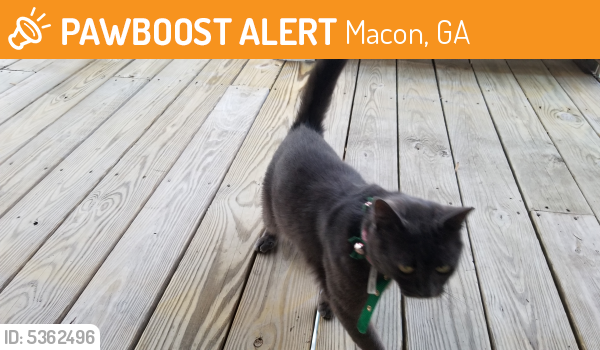 Found/Stray Male Cat last seen Near Charter Lane, Macon, GA, USA, Macon, GA 31210
