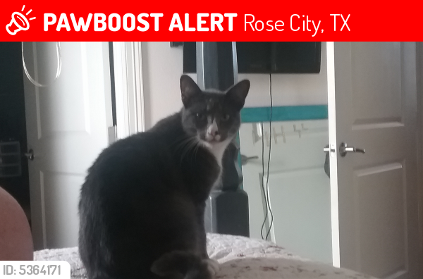 Lost Male Cat last seen Near Rose City Dr & Primrose St, Rose City, TX 77662