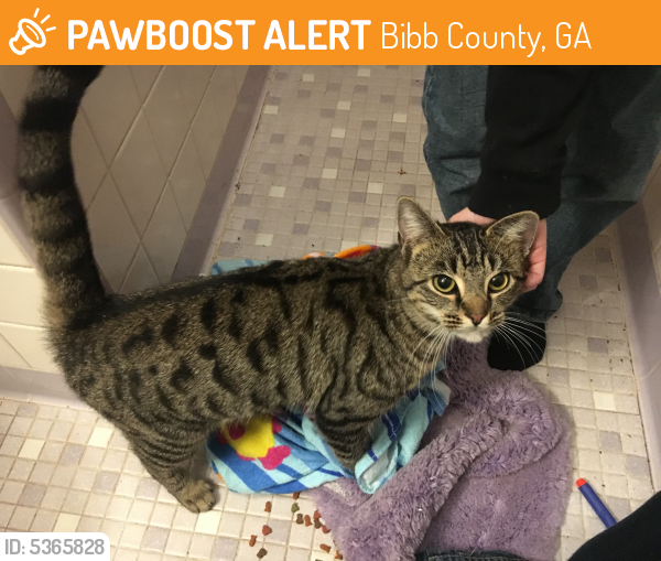 Found/Stray Female Cat last seen Near Sofkee Place & Griffin Rd, Bibb County, GA 31216