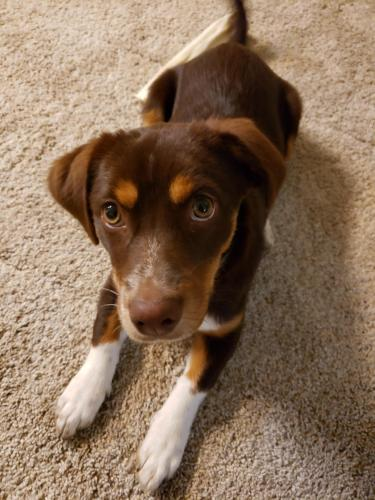 Lost Female Dog last seen Near Grovedale Dr & Sawgrass Ridge Ln, Harris County, TX 77073