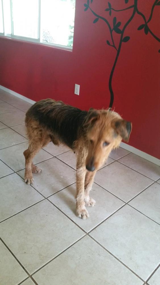 Lost Male Dog last seen Hawaiian Beaches, Hawaiian Beaches, HI 96778
