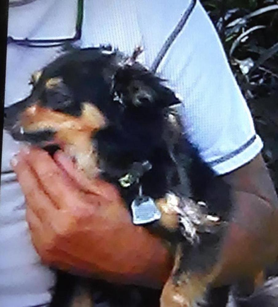 Lost Male Dog last seen Georgia 85, Shiloh, Georgia, EE. UU., GA-85, GA 31826