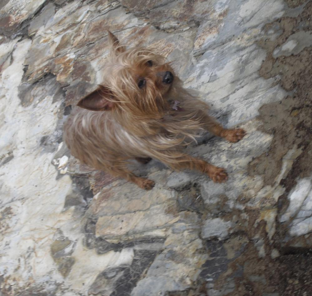 Lost Female Dog last seen Near Broadway & Acacia Ave, Los Angeles County, CA 90606
