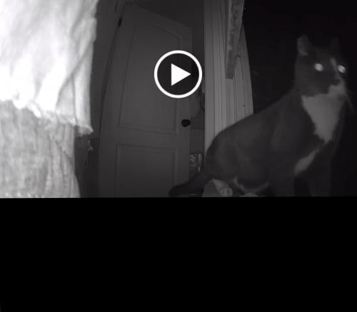 Lost Male Cat last seen Near N Kenwood St & W Magnolia Blvd, Burbank, CA 91505