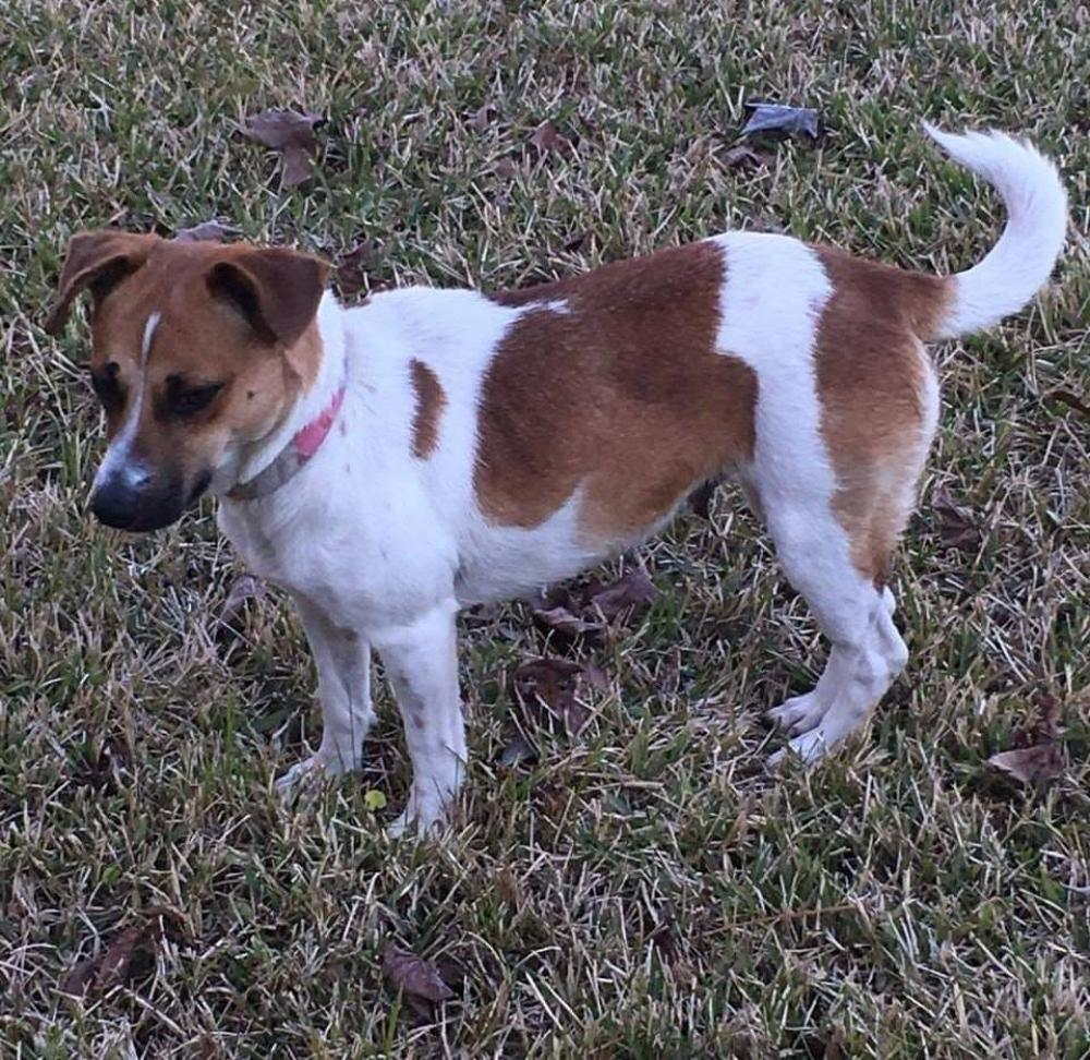 Found/Stray Female Dog last seen Near Shivers Dr & Bettes Ln, Beaumont, TX 77708
