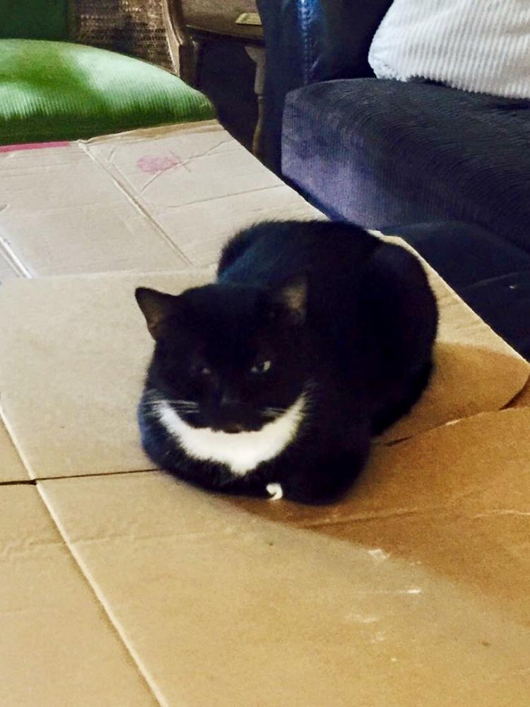 Lost Male Cat last seen Near Unadilla Trl & Amadahi Trl, Macon, GA 31220