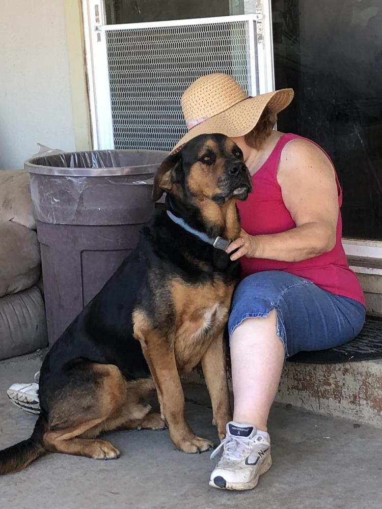 Lost Male Dog last seen Near Northgate Dr & Main, Manteca, CA 95336