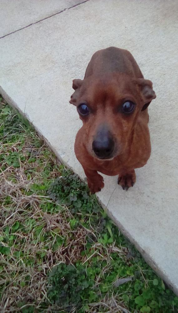 Found/Stray Male Dog last seen Towaliga Trail, Forsyth, GA, USA, Monroe County, GA 31029