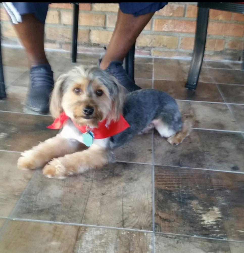 Lost Male Dog last seen Near Arthur Ln & Ridgeland Ave, Beaumont, TX 77706