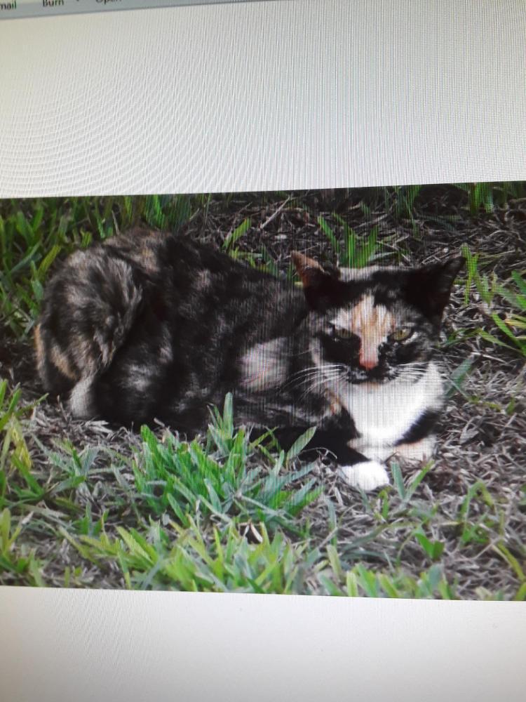 Lost Female Cat last seen Near W Broward St & S 13th St, Lantana, FL 33462