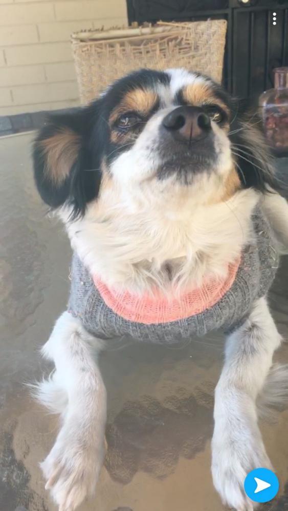 Lost Female Dog last seen Near W Campbell Ave & N 51st Ave, Phoenix, AZ 85031