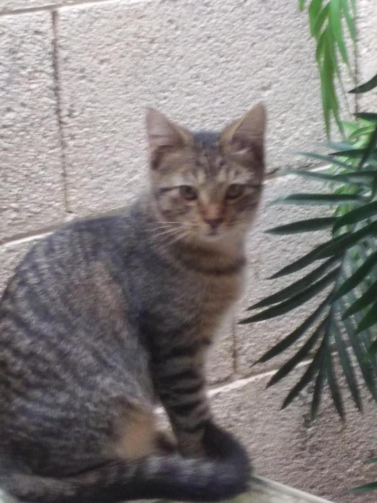 Lost Male Cat last seen 43rd Ave and Bell Road, Glendale, AZ 85308