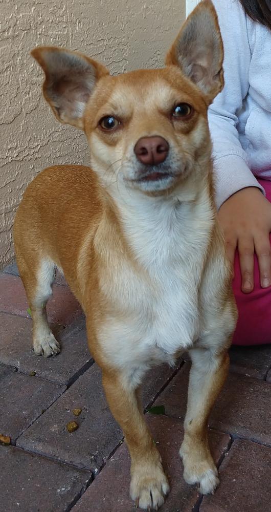 Found/Stray Male Dog last seen Near Silver Falls Blvd & SW 125th Ln, Miramar, FL 33027