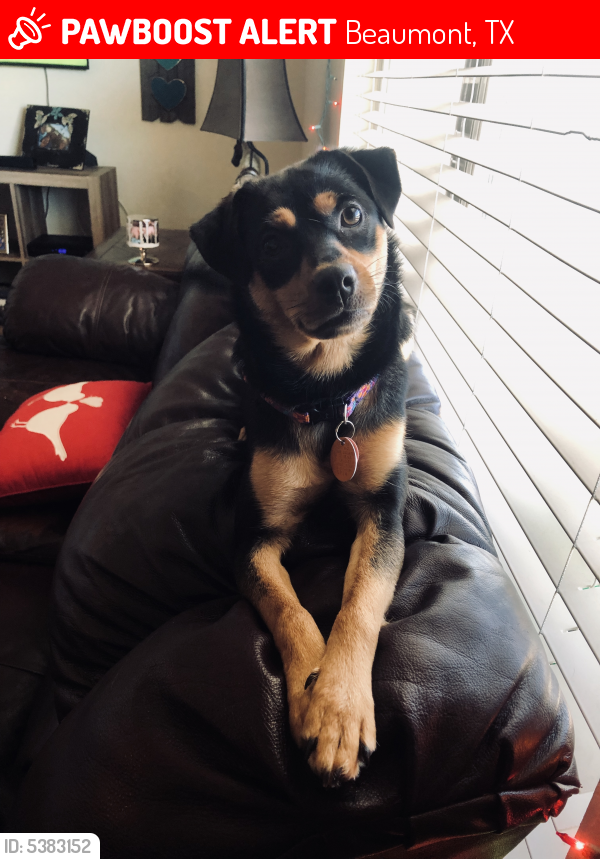 Lost Female Dog last seen Near Gladys Ave & N Major Dr, Beaumont, TX 77706
