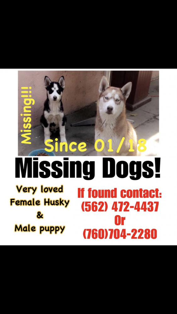 Lost Female Dog last seen Near E McMillan St & S Butler Ave, Lynwood, CA 90262