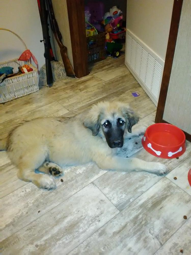 Lost Male Dog last seen Near Co Rd 4191 & Pvt Rd 8940, Newton County, TX 77614