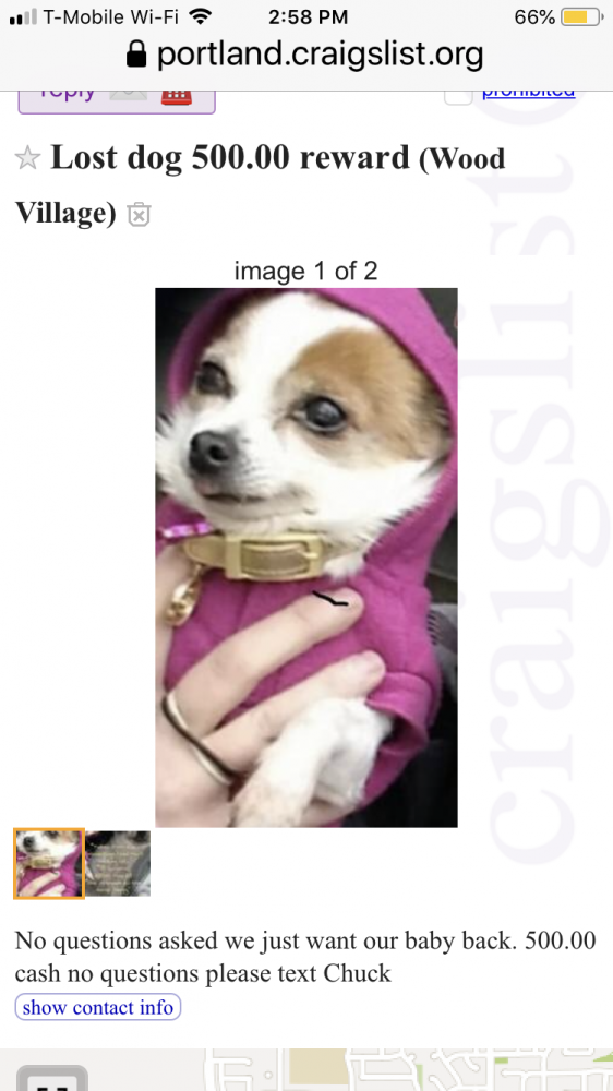 Portland Craigslist Org Pets