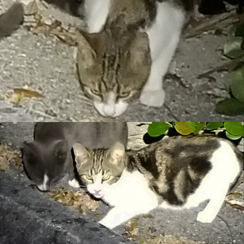 Lost Unknown Cat last seen Near NW 40th Ct & NW 21st Ave, Pompano Beach, FL 33073