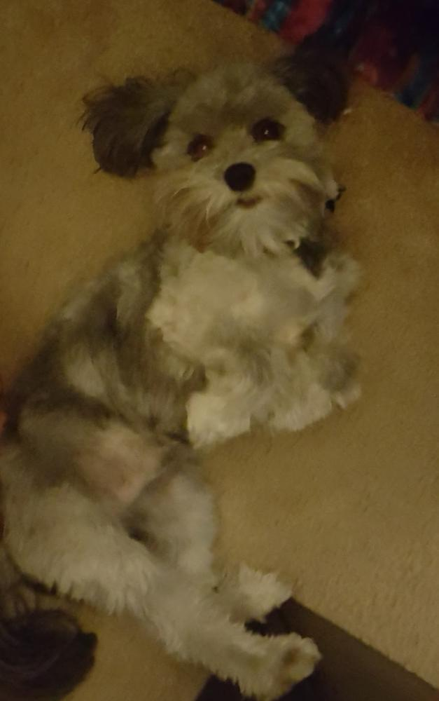 Lost Male Dog last seen Near Autunm Trce & Shadowbend Cir W, Hardin County, TX 77657