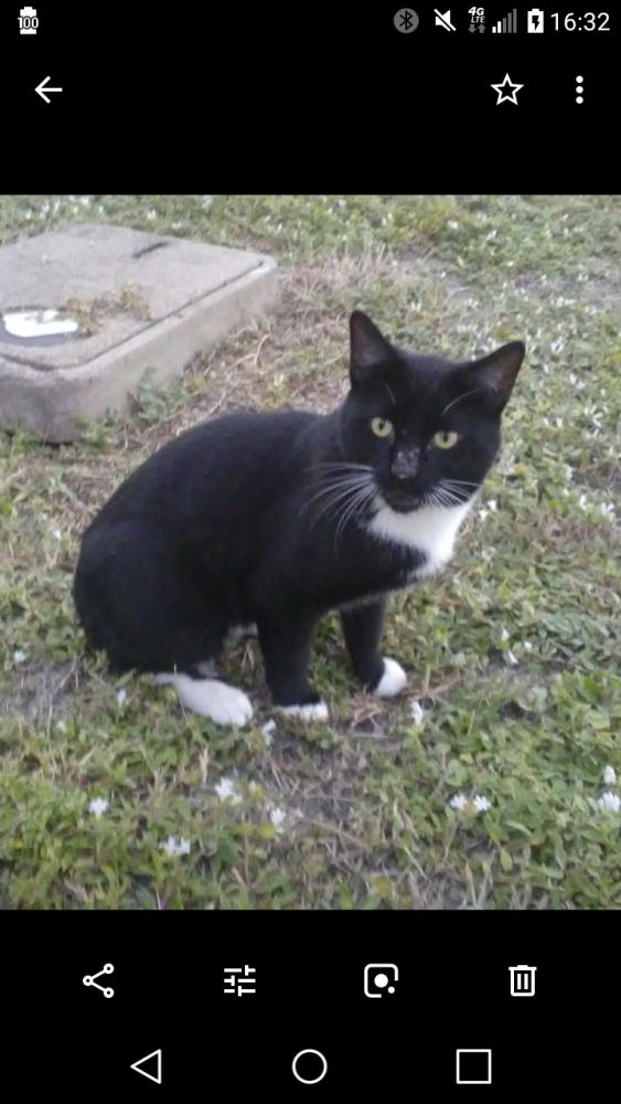 Lost Male Cat last seen Near SE 23rd Ave & SE 5th St, Pompano Beach, FL 33062