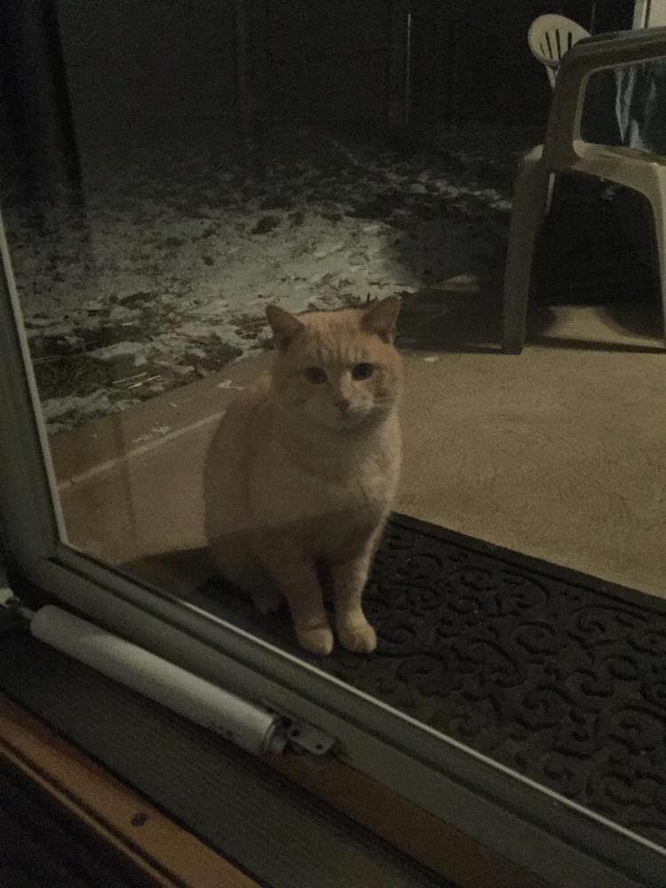 Found/Stray Male Cat last seen Near Corson Rd & Laubert Rd, Whitemarsh Township, PA 19428