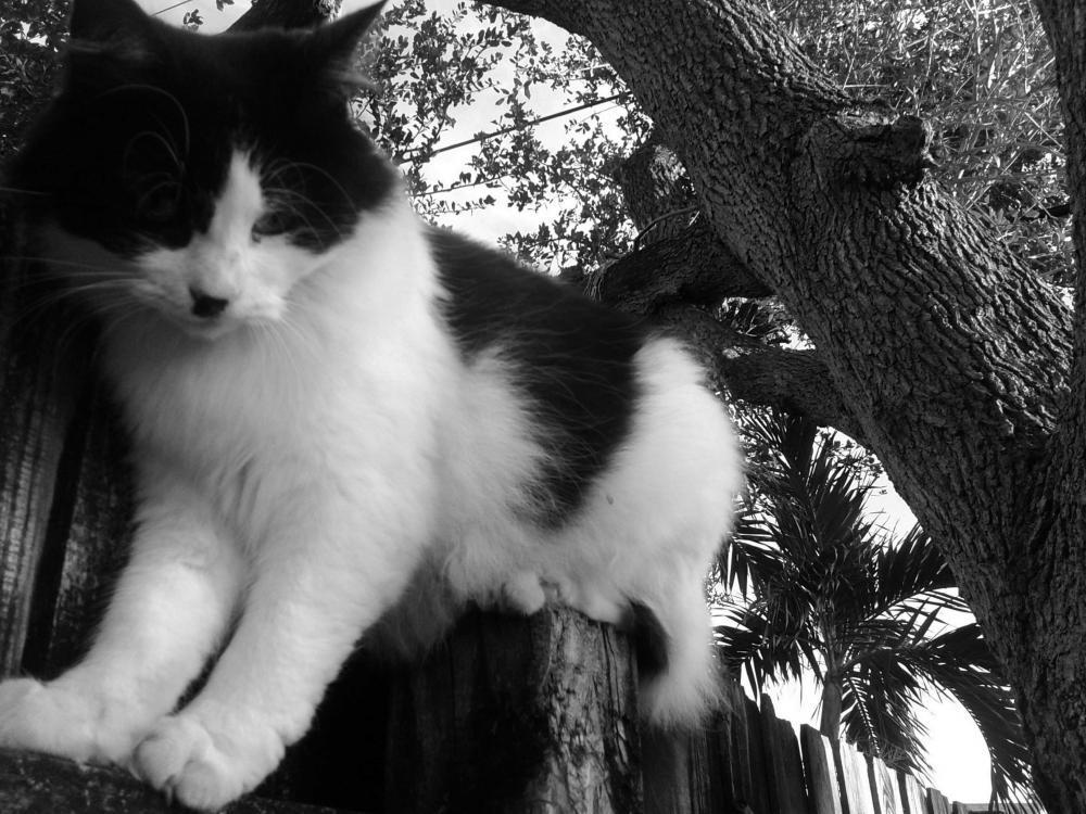 Lost Female Cat last seen Near N 64th Ave & Simms St, Hollywood, FL 33024