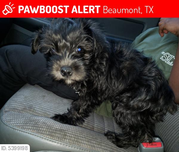 Lost Female Dog last seen Near Greenridge Ln & Ferndale Ln, Beaumont, TX 77707