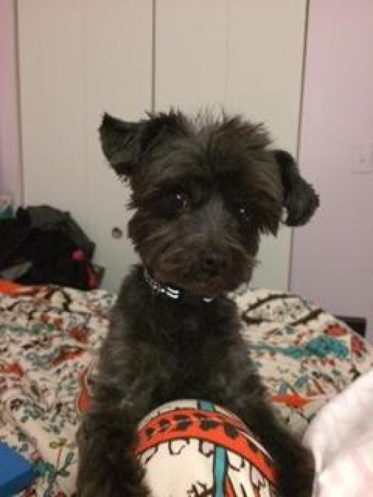 Lost Male Dog last seen Near Plyers Mill Rd & Hutting Pl, Silver Spring, MD 20902