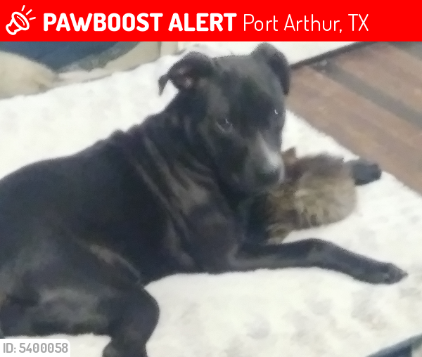 Lost Female Dog last seen Near Colorado Ave & 8th St, Port Arthur, TX 77642