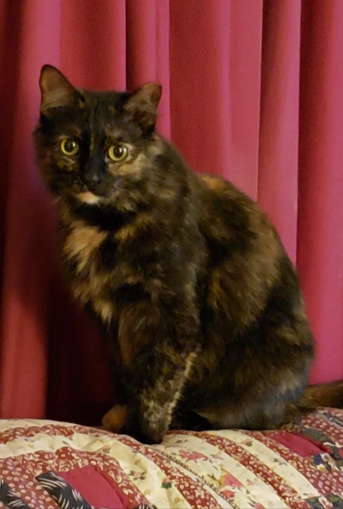 Lost Female Cat last seen Near FM 1078 & Battlin Bear Dr, Orange, TX 77632