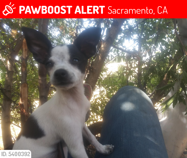 Lost Female Dog in Sacramento, CA 95815 Named Tink tink (ID