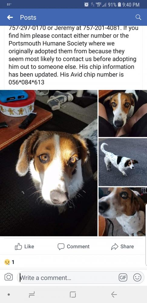 Lost & Found Dogs, Cats, and Pets in Newport News, VA 23662 - Page 6