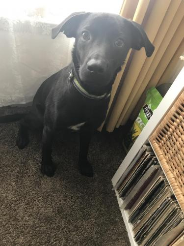 Found/Stray Male Dog last seen Near Lake St & Texas Ave, Bridge City, TX 77611