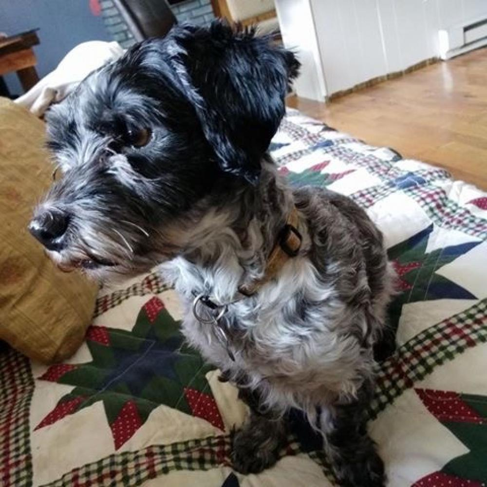 Lost Female Dog last seen Near SW 24th Ct & Sunshine Blvd, Miramar, FL 33023