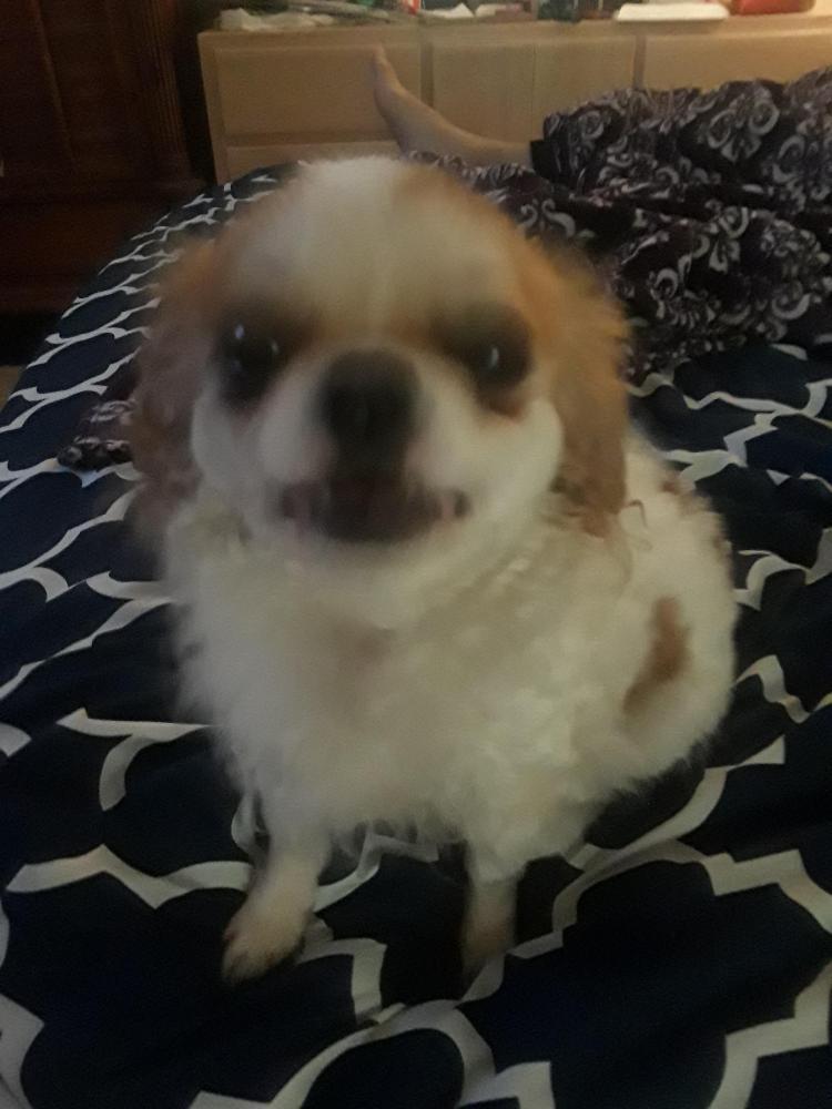 Found/Stray Female Dog last seen Near NW 51st St & NW 85th Ave, Lauderhill, FL 33351