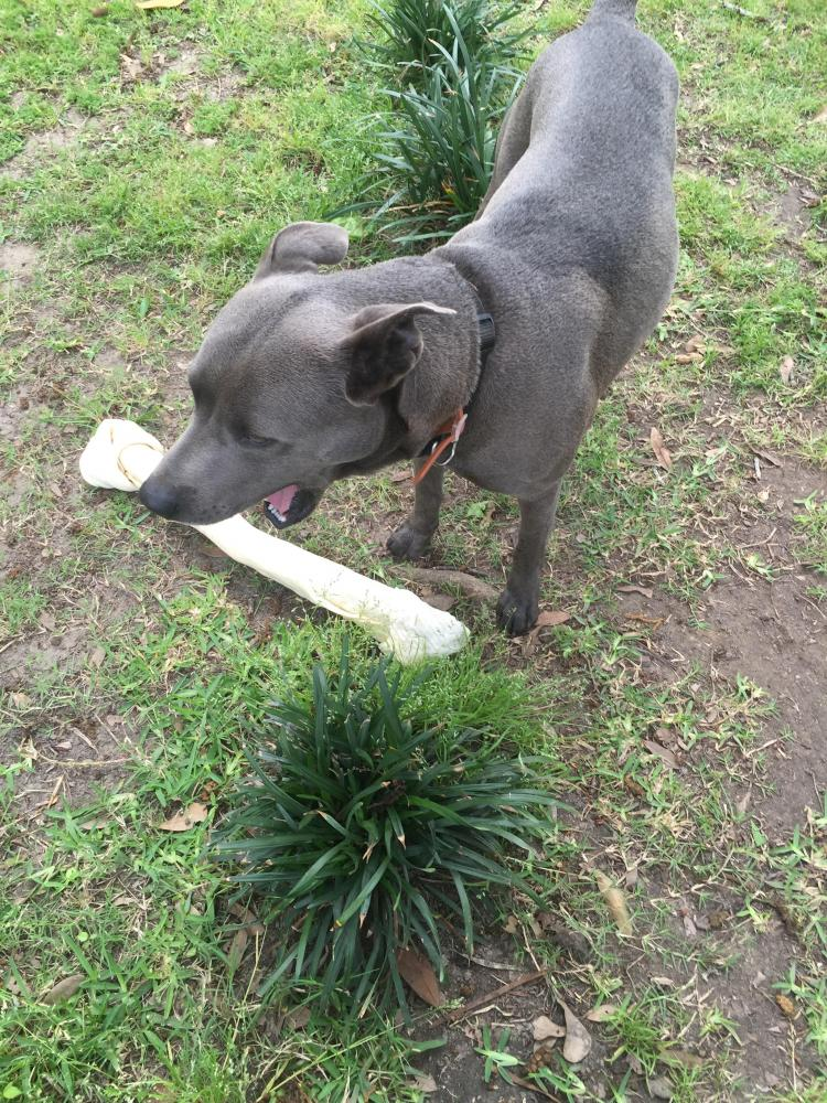 Lost Male Dog last seen Near N 23rd St & Eloise St, Beaumont, TX 77707