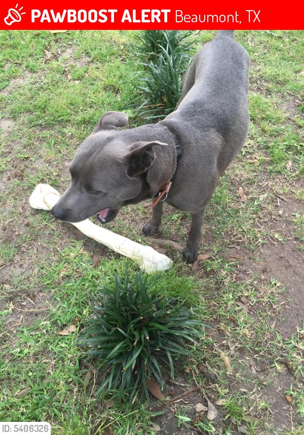 Lost Male Dog last seen Near N 23rd St & Eloise St, Beaumont, TX 77707