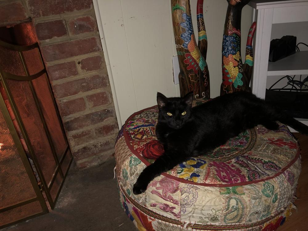 Lost Male Cat last seen Near Long Pine Dr & Murillo St, Springfield, VA 22151