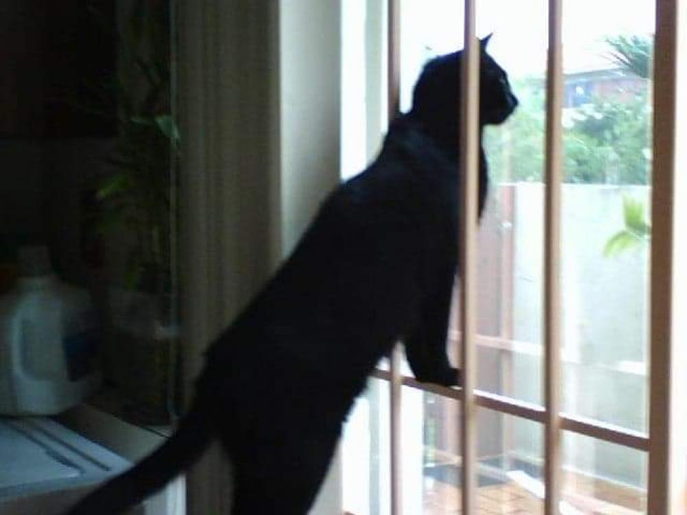 Lost Female Cat last seen Near SW 81st Way & SW 27th Pl, Davie, FL 33328