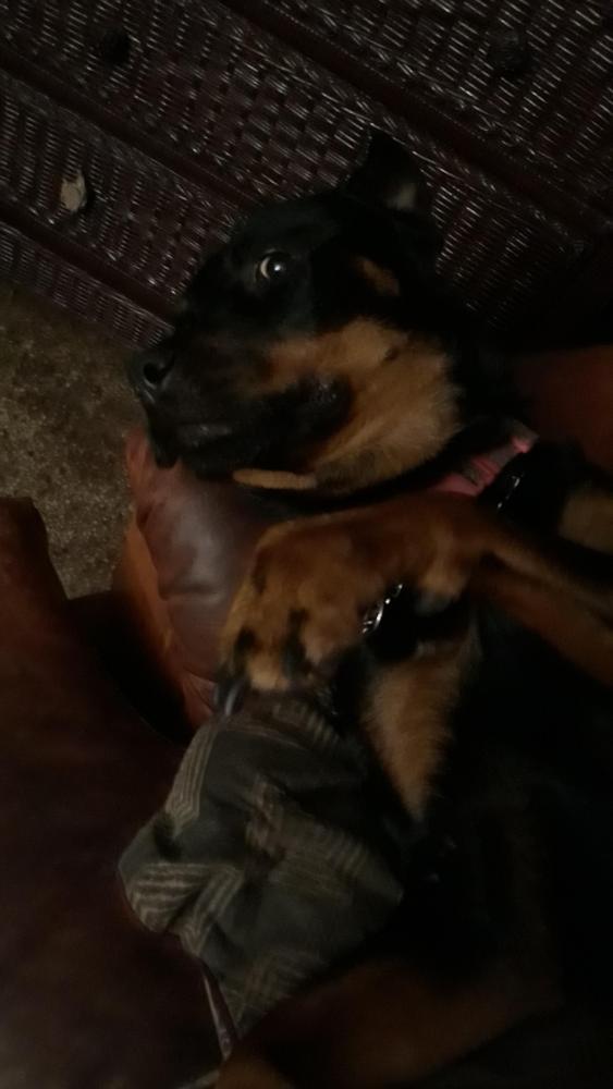 Lost Female Dog last seen Near NE 19th Ave & NE 6th St, Pompano Beach, FL 33060