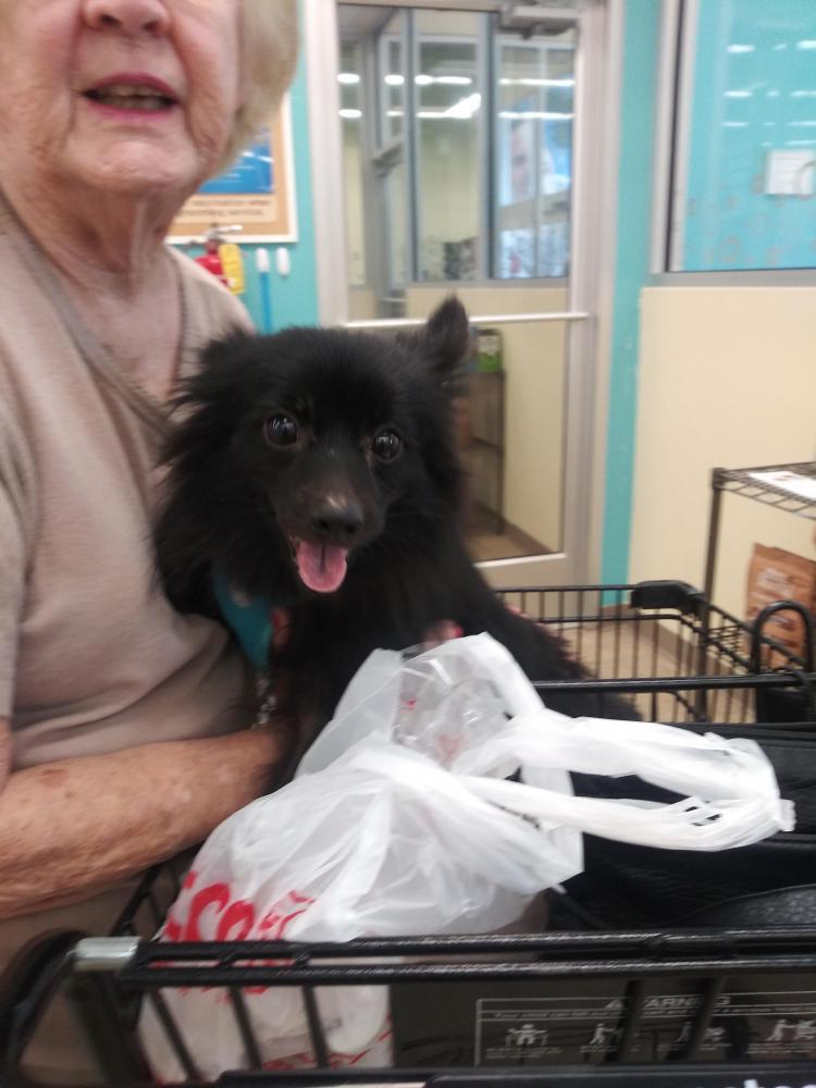 Found/Stray Female Dog last seen Near Hollywood Blvd & N 29th Ave, Hollywood, FL 33020