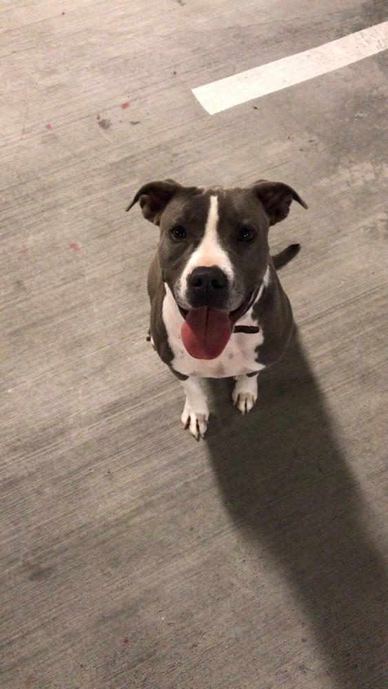 Lost Female Dog last seen Near NE 150th St & NE 2nd Ave, Miami, FL 33161