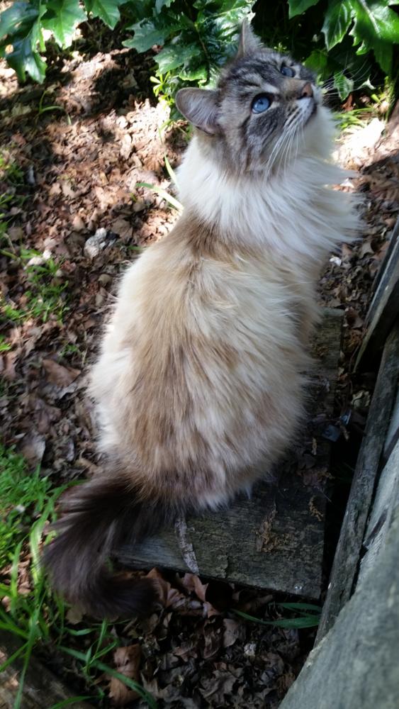 Lost Female Cat last seen Near Hudson Ave & Eccleston Ave, Contra Costa County, CA 94597