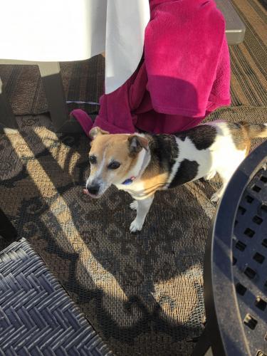 Lost Male Dog last seen Near Kamakani St  and Mamalahoa , Captain Cook, HI 96704