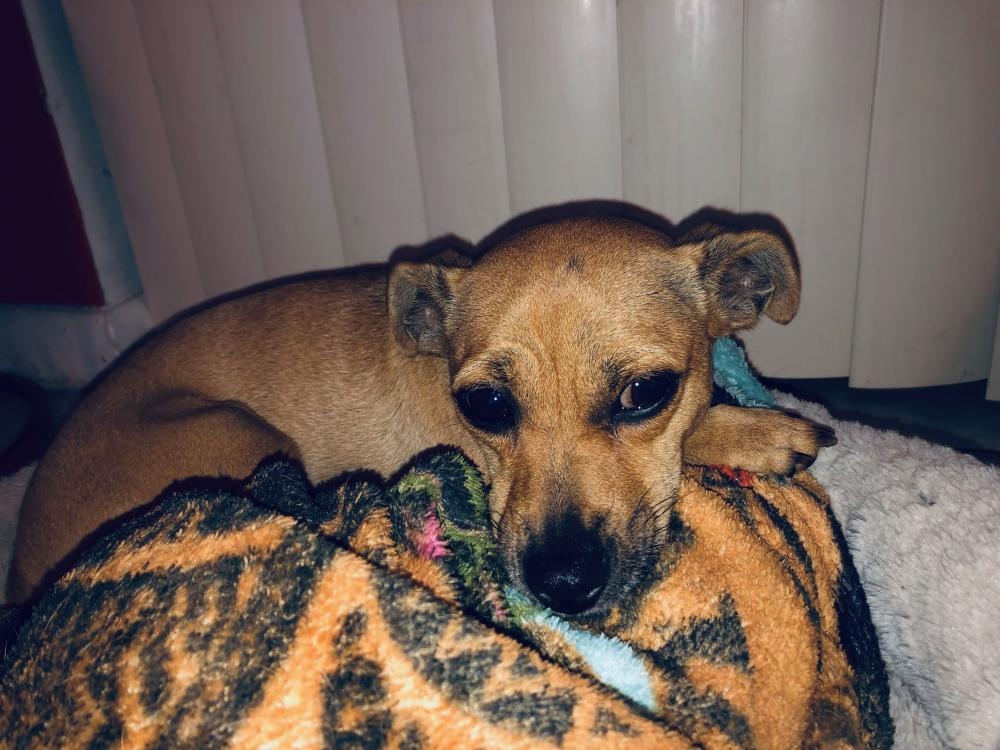 Lost Female Dog last seen Near NW 79th Ave & NW 1st Ct, Margate, FL 33063