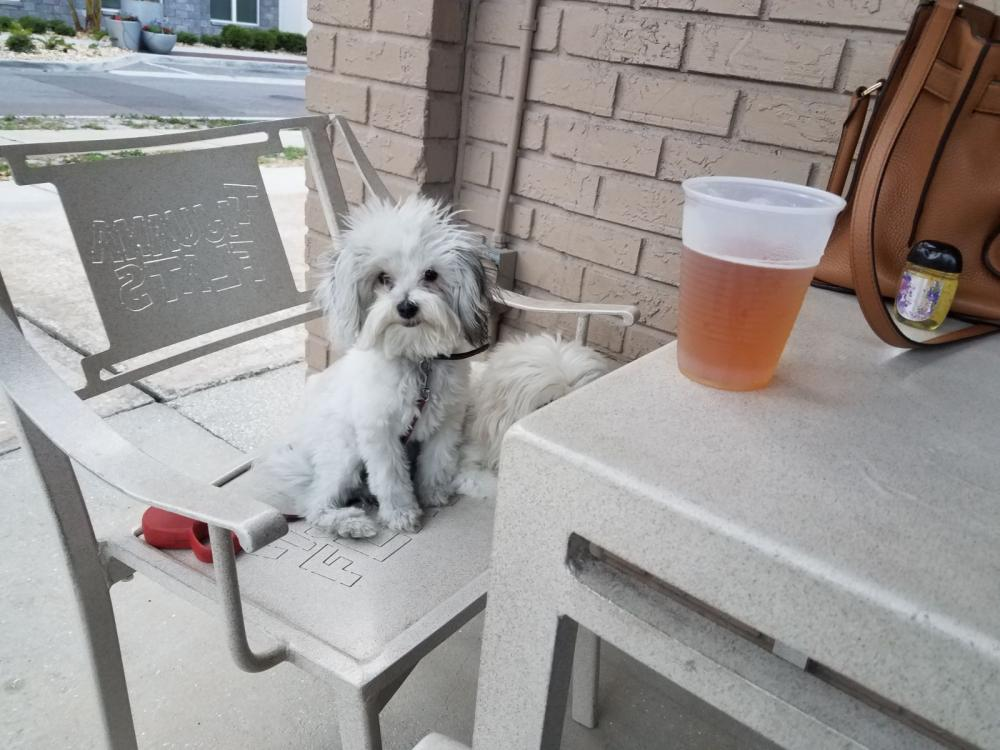 Lost Female Dog last seen Near NW 64th Ave & NW 24th St, Sunrise, FL 33313