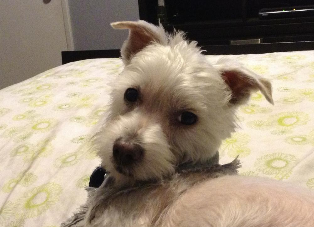 Lost Male Dog last seen Near 3400 nw 38 ave, Fort Lauderdale, FL 33317