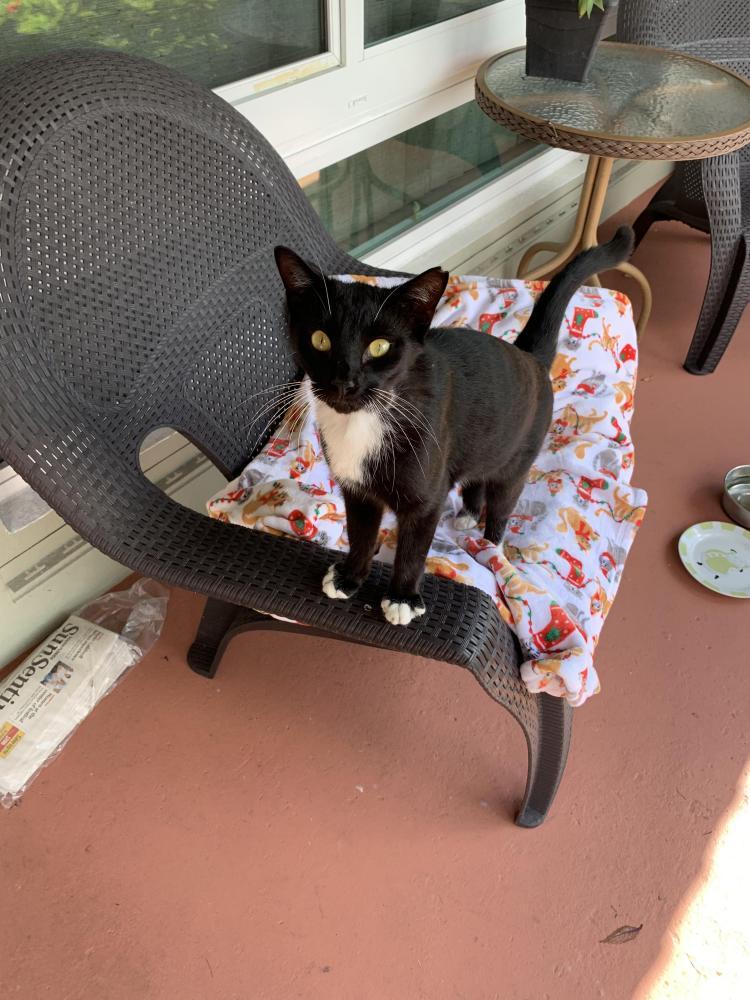 Found/Stray Unknown Cat last seen SE 2 AVE  pompano beach , Pompano Beach, FL 33060