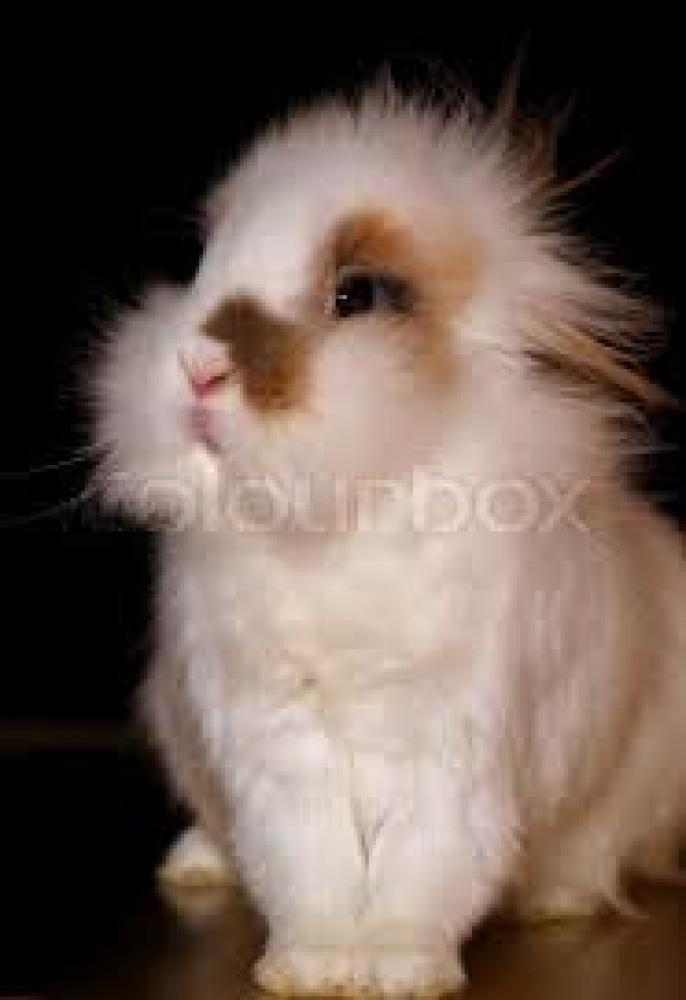 Lost Male Rabbit last seen Near Ne 24th ct, Boca Raton, FL 33431