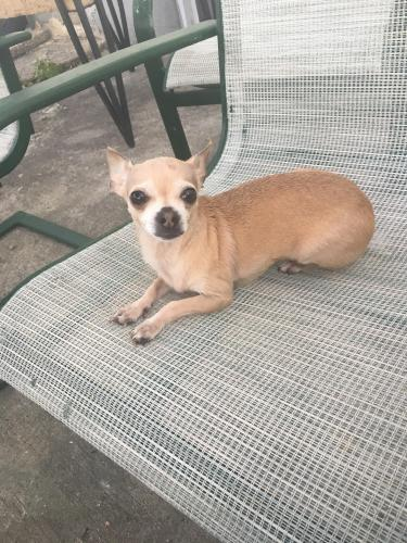 Lost & Found Dogs, Cats, and Pets in Queens, NY 11422 - Page